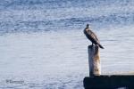 Der Vogel der alles im Blick hat